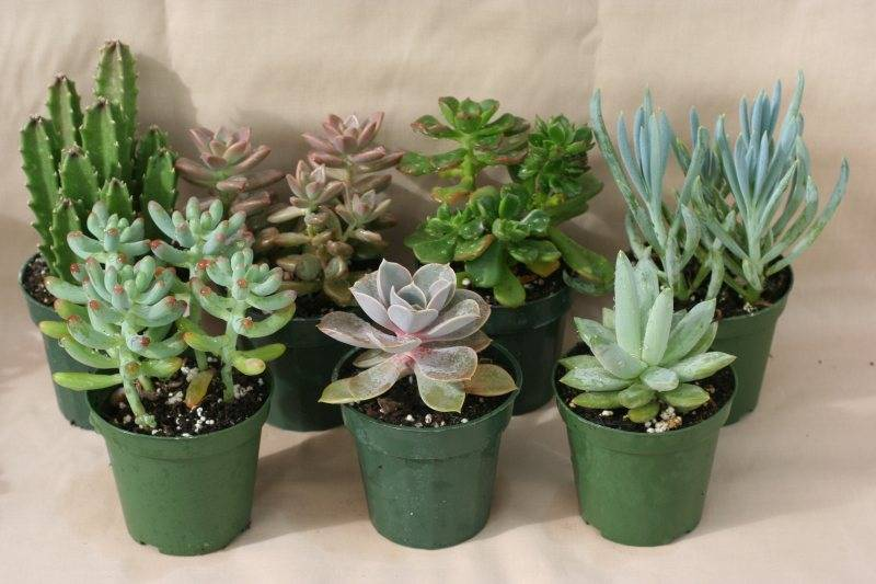 Succulents- The Perfect DIY Gift! - The Gift Exchange Blog
