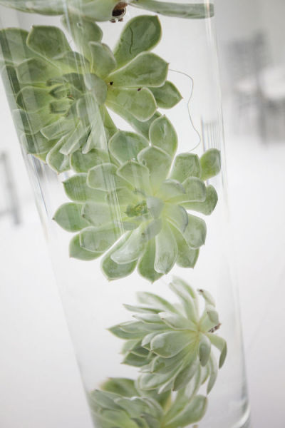 Succulent In Water What S The 456