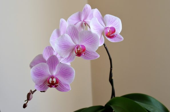 bloom-blossom-flora-531714